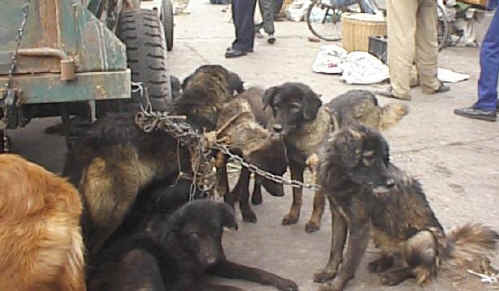 cruelty towards animals in the modern world Hsi is dedicated to protecting all wildlife from cruelty  acts of compassion toward animals, but the modern version causes  stop wildlife abuse.